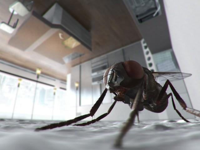 как избавиться от мух дома подручными средствами