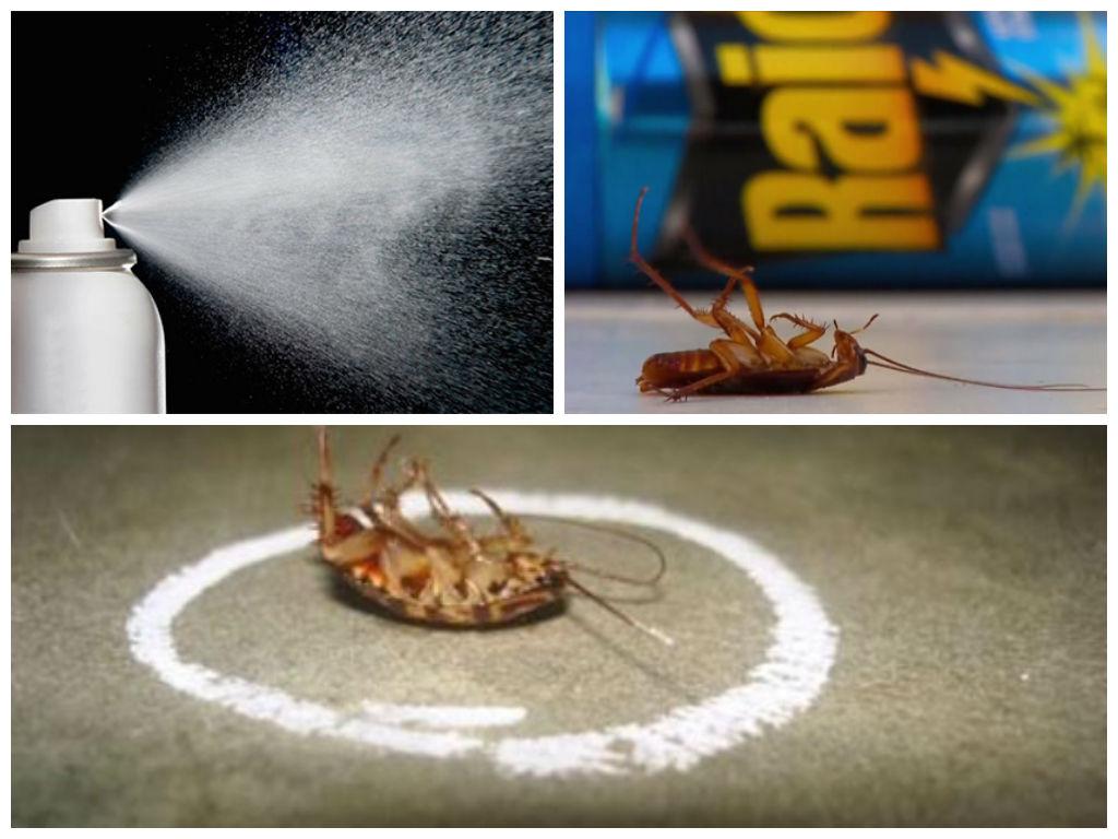 Как избавиться от большого количества тараканов