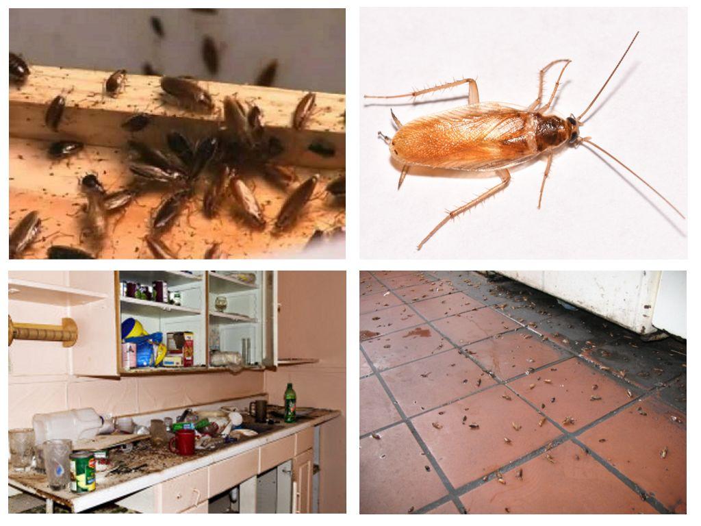 как избавиться от тараканов без химии