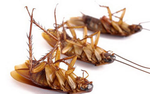 как избавиться от тараканов безопасно