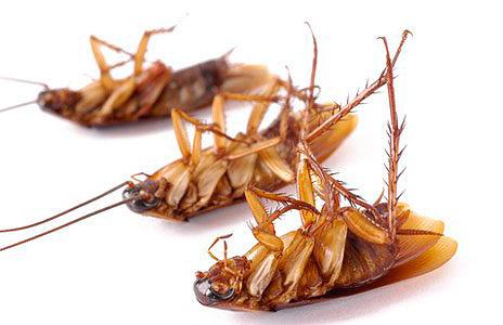 очень много тараканов как избавиться