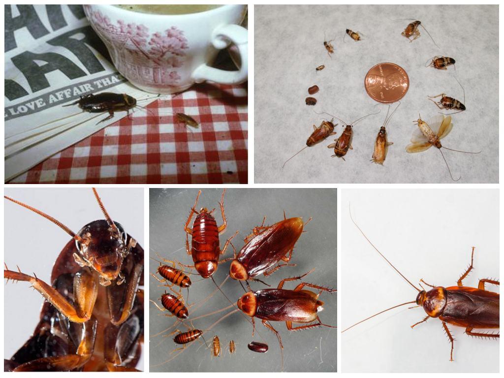 лучший способ избавиться от тараканов