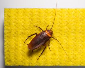 самый лучший способ избавиться от тараканов