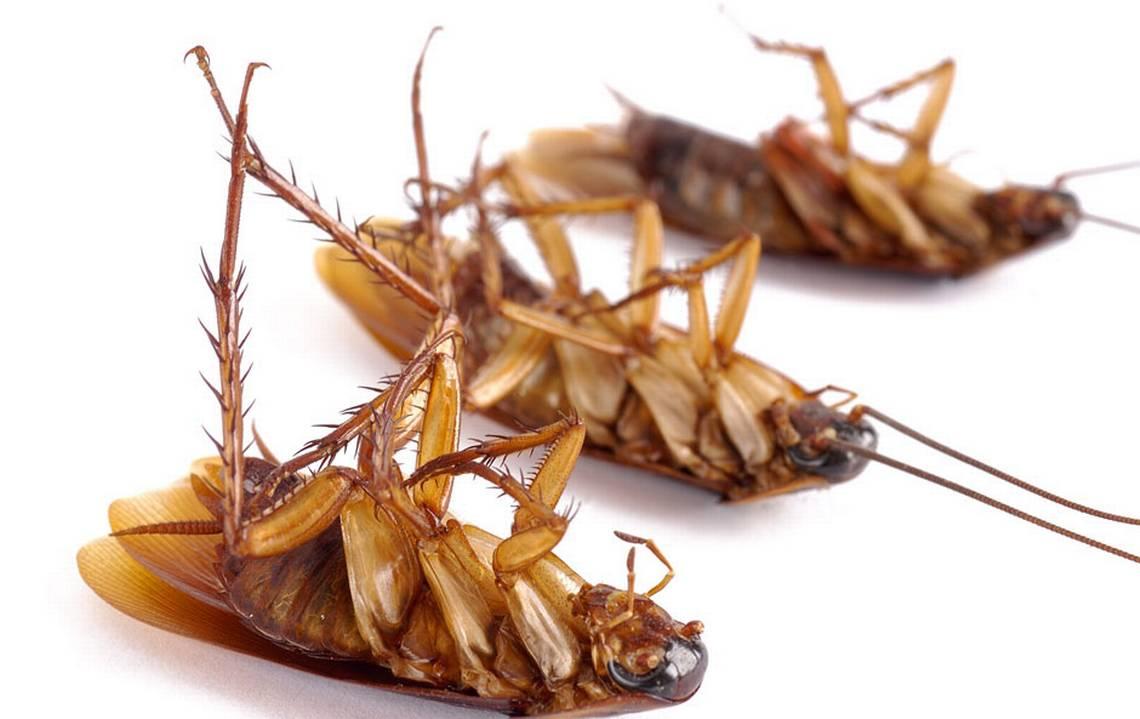 избавиться от тараканов служба дезинсекции