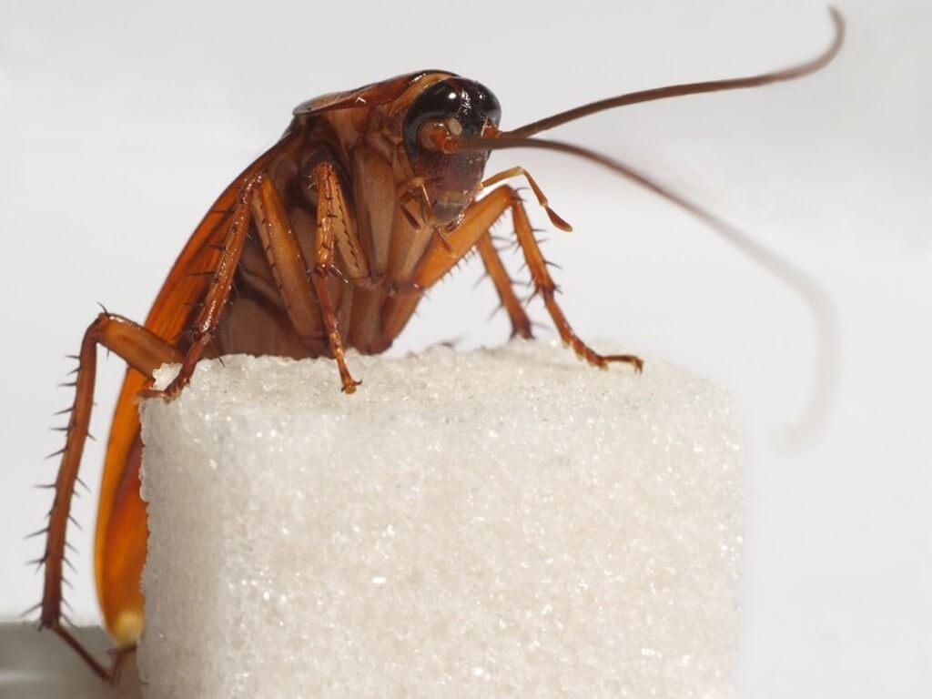 как избавиться от тараканов прусаков