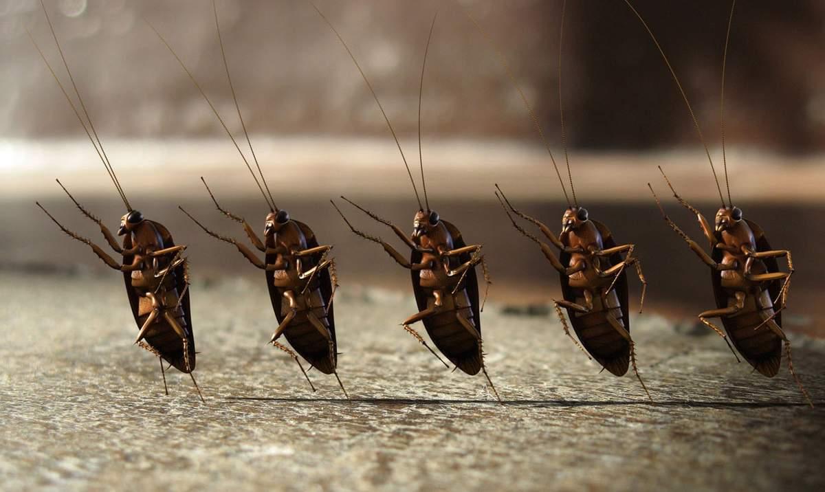 появились тараканы как от них избавиться