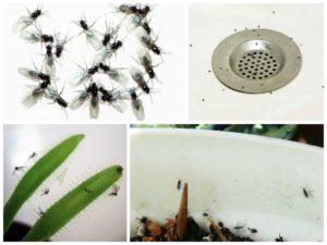 как избавиться от мелких мух дома
